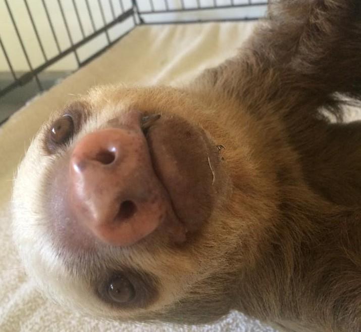 Sloth Sanctuary of Costa Rica, Facebook.